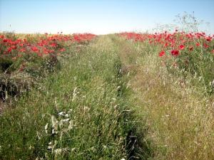 camino que desaparece entre la hierba