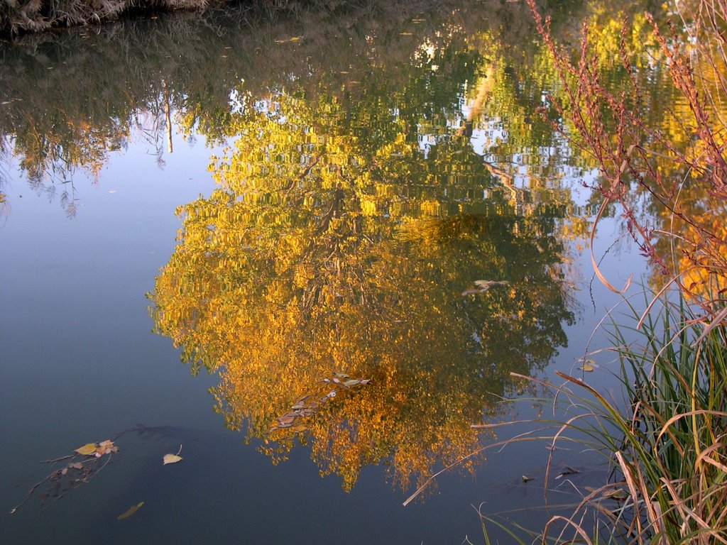 Oto o valladolid rutas y paisajes for Arboles que no se le caen las hojas en invierno