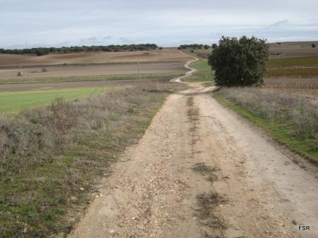 Cañada del Pinar