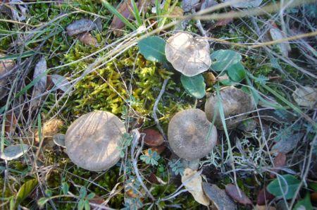 Pequeñas setas entre hierba, musgo y hojas de encina