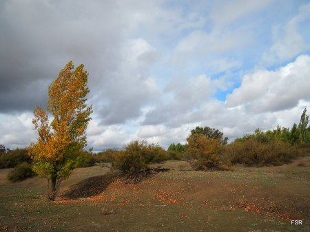 El otoño avanza con sus occres ya marillos...