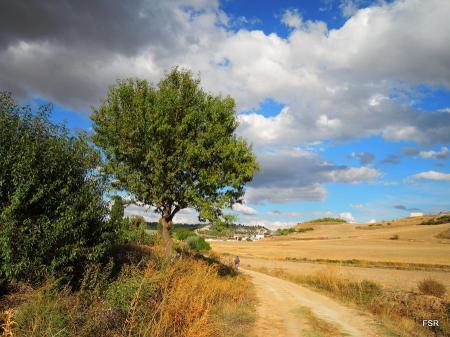 Entre Encinas y Canilla