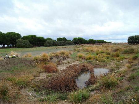 Laguna de Enmedio