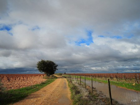 Camino entre viñas