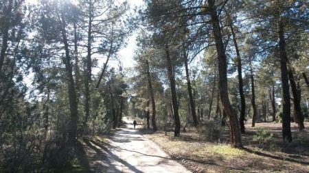 Entre pinares