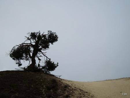 Negral y duna