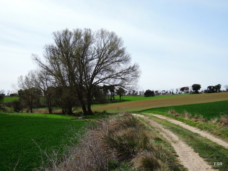 Manantial de la Cañada