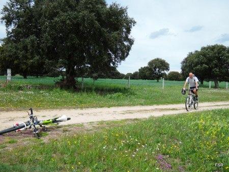 Atravesando el monte de Bobadilla por la cañada de Extremadura
