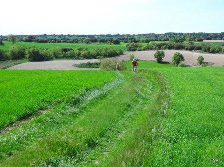 Robles y campos