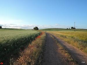Camino entre avenas y bacillares