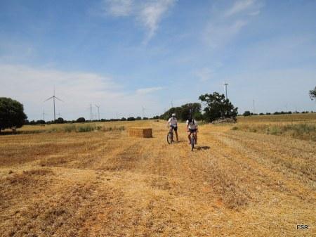 Por los campos cosechados