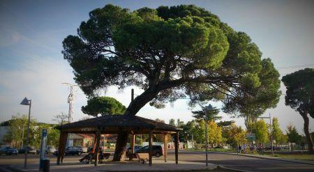 La parada del autobús en el Pinar de Antequera