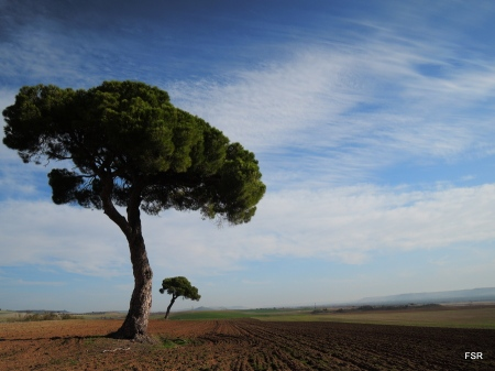 Los dos pinos
