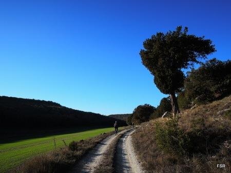 Sabina en el valle del Maderón