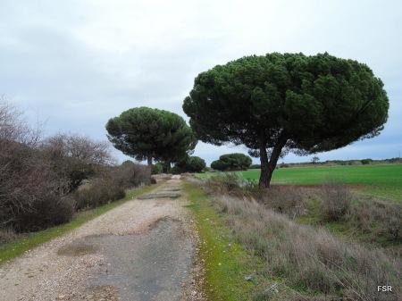 Vieja carretera de Hornillos