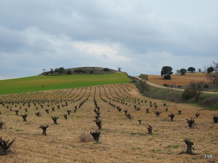 Viñas y colinas