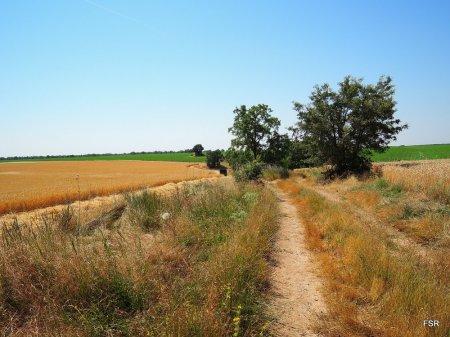 Camino de Misa