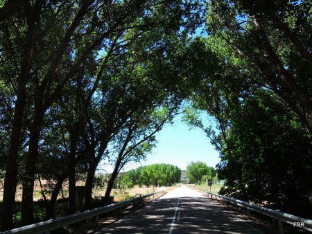 La carretera de Quintanilla a Cuéllar aprovecha el frescor del Valimón