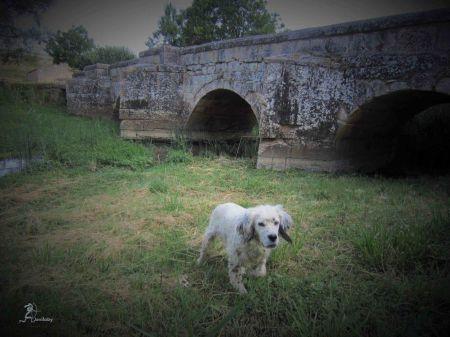 Uno de los puentes de Pinilla