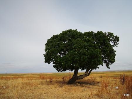 Moral solitario en Tierra de Campos