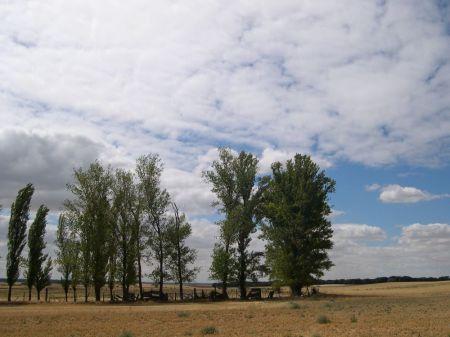 Chopos en el prado del arroyo
