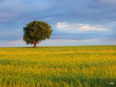Resultado de imagen para paisajes